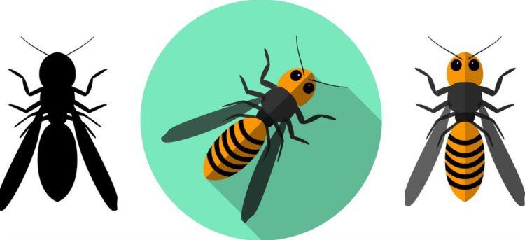 Protégeons les abeilles face aux frelons asiatiques