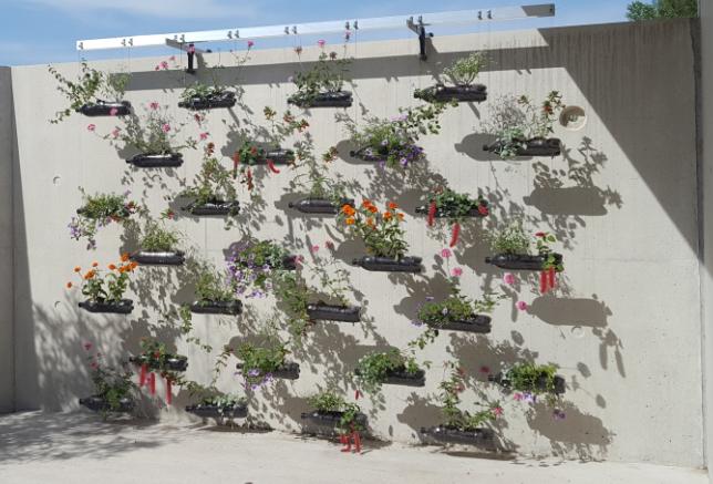 Un mur végétal créé par et pour nos jeunes !