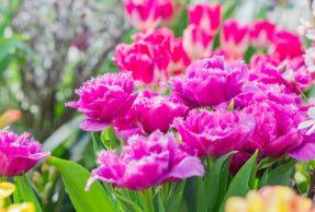 Concours floral