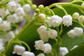 Opération muguet – aidons nos fleuristes