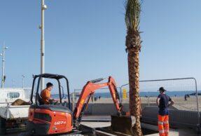 Les palmiers arrivent sur le Front de Mer
